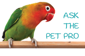 Ask the Pet Pro